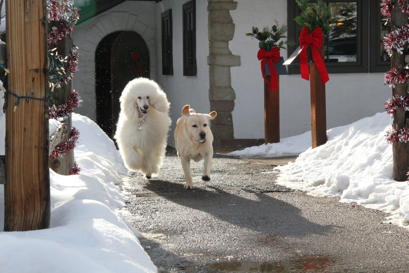 Copy of Christmas Vacation 8 10 Movie CLIP Turkey Dinner ... |Christmas Vacation Dog Dinner